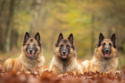 De 3 Bosss van het bos