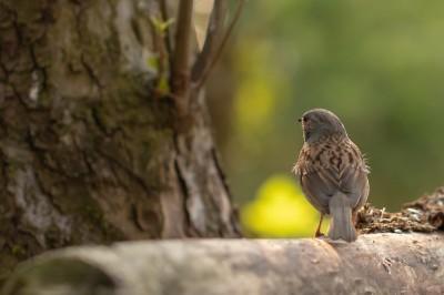 Vogel hut Eerbeek